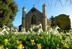 Thorpe Market snowdrops 540AT